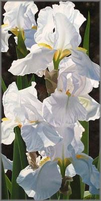 BRIAN DAVIS ARTIST Enchanting Irises by Artist Brian Davis
