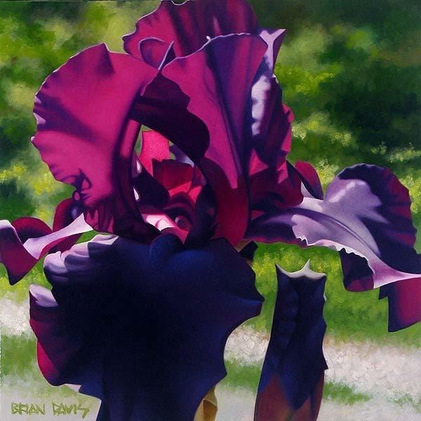 BRIAN DAVIS ARTIST Passionate Purple Iris by Artist Brian Davis