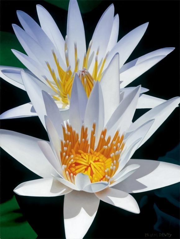 BRIAN DAVIS ARTIST Water Lily Duet by Artist Brian Davis