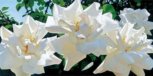 BRIAN DAVIS ARTIST White Radiant Rose Quartet by Artist Brian Davis