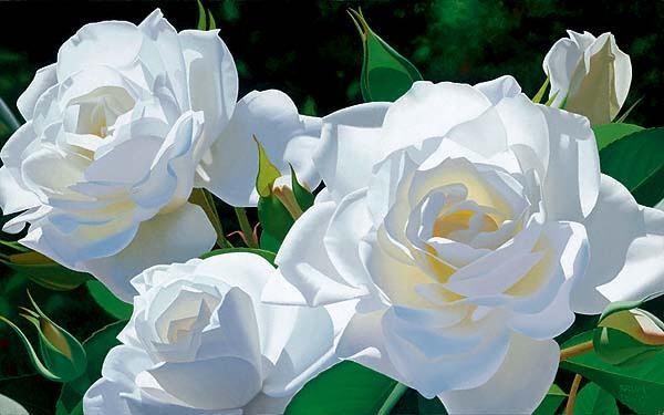 BRIAN DAVIS ARTIST White Rose Garden by Artist Brian Davis