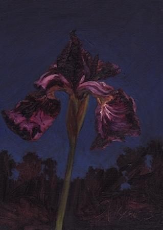 PAUL KEYSAR ARTIST - Purple Iris at Night by Paul Keysar